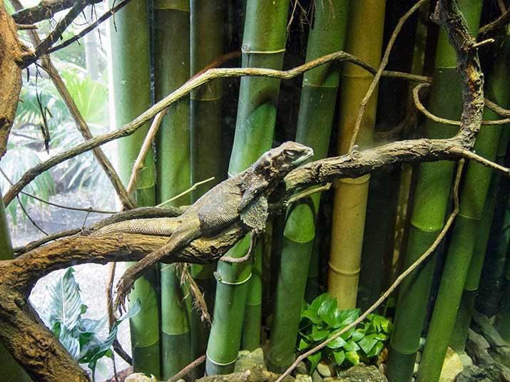 zoo-yash
